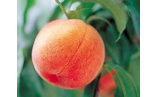 [№5657-2335]黄金桃 5kg