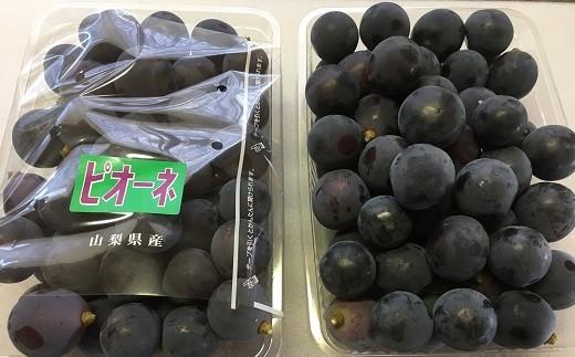 【2019年発送分先行予約】中村葡萄園の旬の葡萄粒 ピオーネ2kg箱
