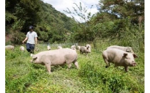 椎葉放牧豚 ロースブロック