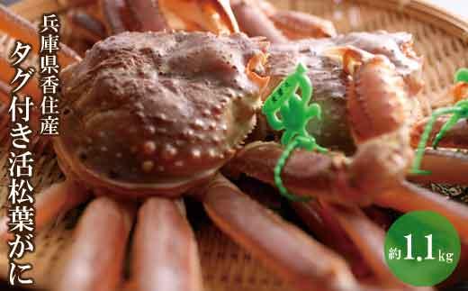07-06  兵庫県香住産 タグ付き活松葉がに 約1.1kg