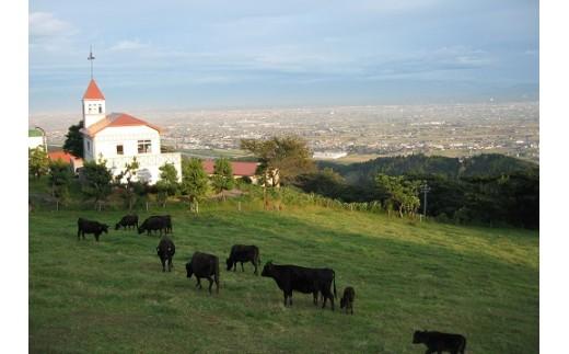 稲葉メルヘン牛は小矢部市内の稲葉山牧場で育てられています