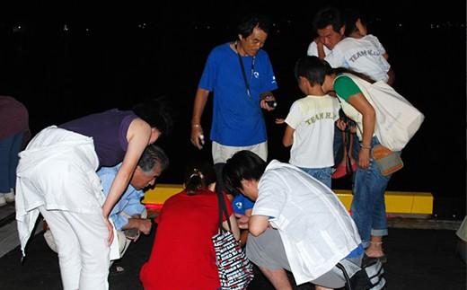 夏の夜、ウミホタルを観察します。