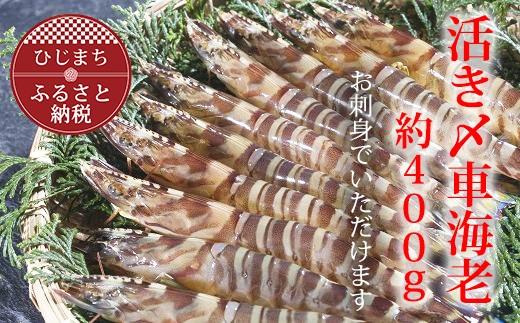 【着日指定可】日出町大神のお刺身用活き〆車エビ(約400g)