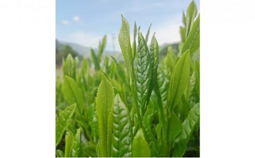 [№5677-0078]天龍村産 信州若蒸し茶 一番茶