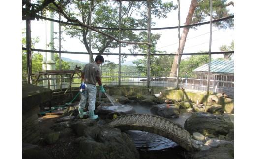 水禽舎の清掃