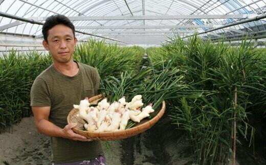 自然ゆたかな四万十市で栽培されています