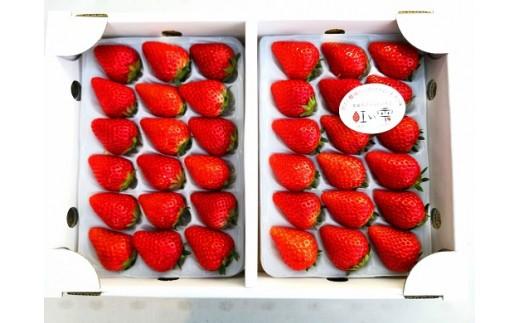 【A-13】★100組限定 予約受付開始★はしもと農園イチゴ 大粒 紅い雫(36個)