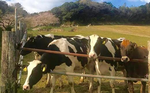 人懐っこい牛たち。広い牧場でのびのびと育てています。