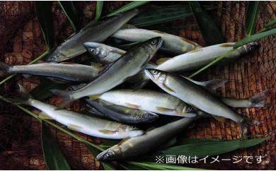 【令和元年6月15日網漁解禁!】 高津川天然あゆ冷凍500g