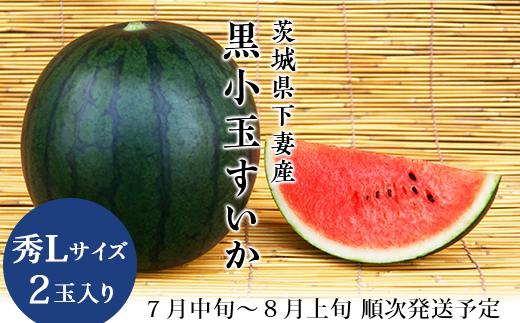12-9 茨城県下妻産 黒小玉すいか(秀L) 2玉