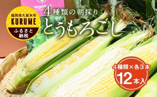 G112 【数量限定・先行受付】農園直送 朝採りとうもうろこし 4種類食べ比べ12本セット