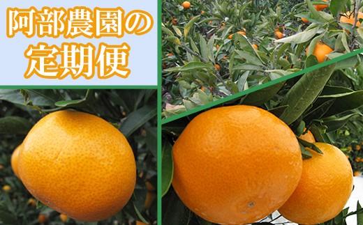 Z0008 阿部農園の季節の定期便A田口早生・石地・青島(11月・12月・1月)