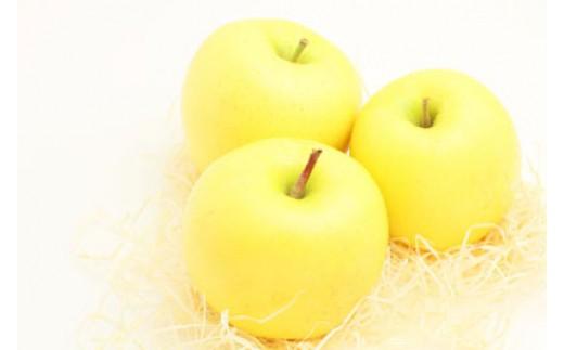 【010-16】【数量限定!】日持ちもよく、大人気!シナノゴールド5キロ(りんご・リンゴ・林檎)