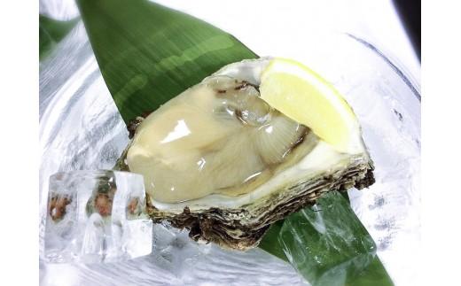 新潟県産 天然岩牡蠣(生食用) 20個入り(3kg)