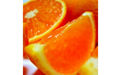 ■厳選!濃厚清見オレンジ 5kg