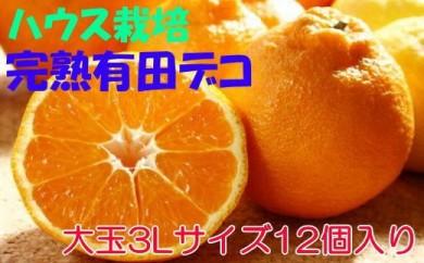 ■ハウス栽培大玉3L完熟有田デコ(不知火) 12個入り[2021年3月~発送]