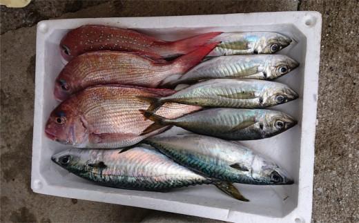 朝獲れ新鮮!最高の漁場豊後水道で獲れた鮮魚の詰め合わせ
