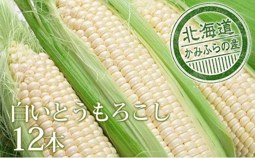 [№5543-0222]朝採り【白いとうもろこし】L-LL 12本セット≪北海道上富良野町産≫