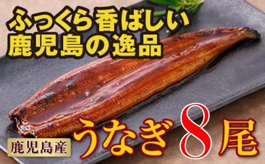 7803 鹿児島産特上うなぎ8尾!