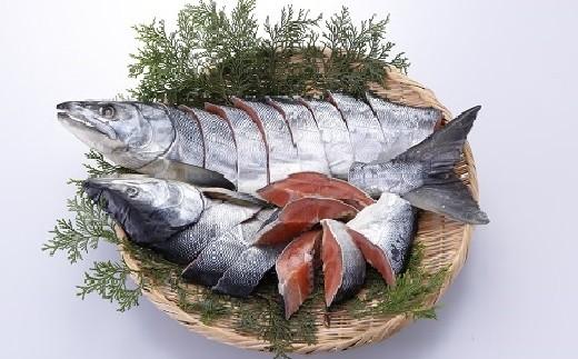 【約1.5kg】北海道産新巻鮭1本[№5651-0496]