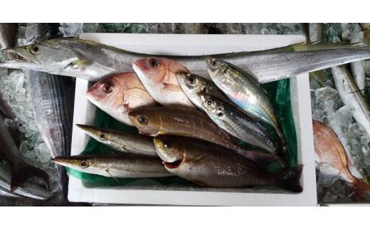 【A09001】魚屋さんの選んだ新鮮お魚詰め合わせ