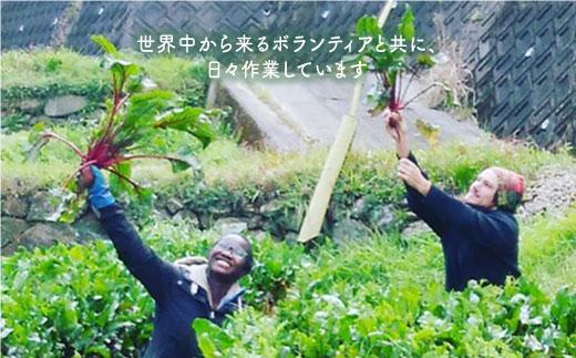 BBE002 【無農薬・自然栽培】東彼杵町産 〈Q-YO〉旬の野菜セット-5