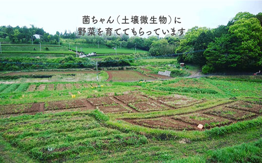 BBE002 【無農薬・自然栽培】東彼杵町産 〈Q-YO〉旬の野菜セット-6