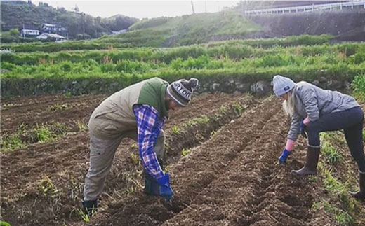 BBE002 【無農薬・自然栽培】東彼杵町産 〈Q-YO〉旬の野菜セット-8