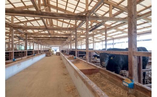 弥川畜産牛舎内部