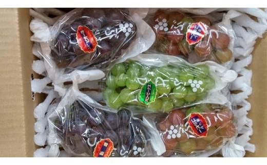 特産品番号272 入佐果樹園 高原町産ぶどうの詰め合わせ(約2kg)