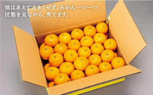 CAA020 原口果樹園の元祖原口みかん(極上みかん) (カタログコード:C-1)-2