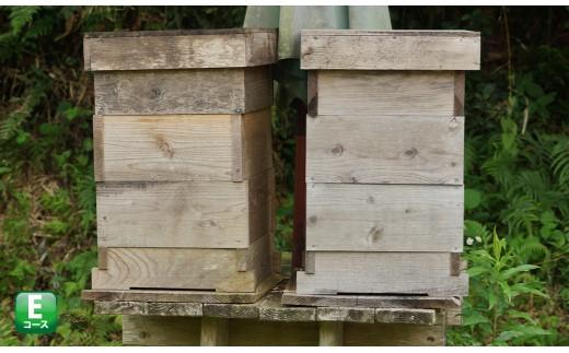 サポートも致します【日本蜜蜂養蜂スターターキット】2個セット P-E1