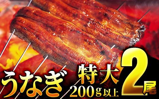 【一尾200g以上!×2尾】特大!肉厚!特選うなぎ