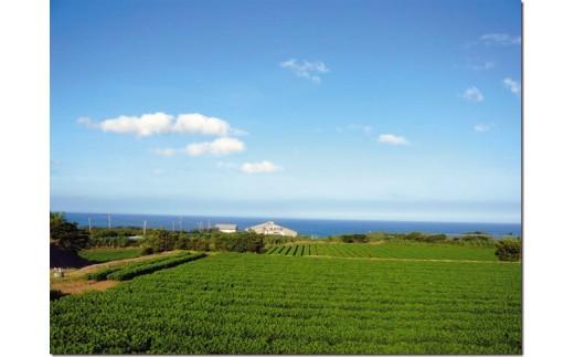 夏が収穫最盛期の種子島のらっかしょう!青い空と海に囲まれ、元気に美味しく育ちました♪