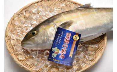 「愛海の恵み」大分豊後水道産 養殖カンパチ(約3~4kg 1本)