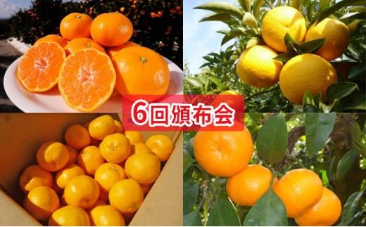 [№5850-0457]【6回頒布会】フジカワ果樹園オリジナル・新季節の柑橘セット