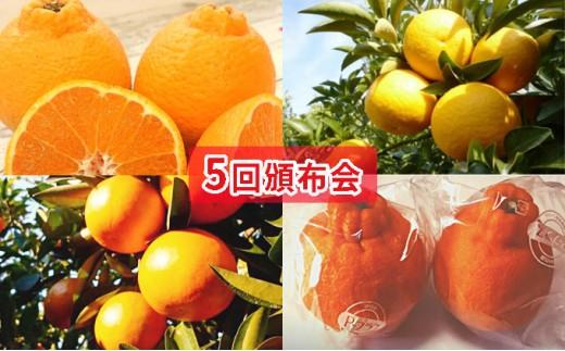 [№5850-0458]【5回頒布会】フジカワ果樹園オリジナル・新季節の柑橘セット