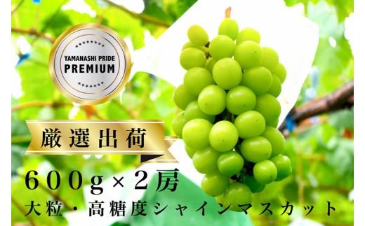 2602【山梨産】厳選・最高級シャインマスカット2房