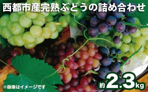 1.5-81 【先行予約・数量限定】西都産完熟ぶどうの詰合わせ 2.3kg