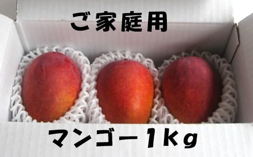 【先行予約】【ご家庭用】完全無加温~地球に優しい天城マンゴー1kg