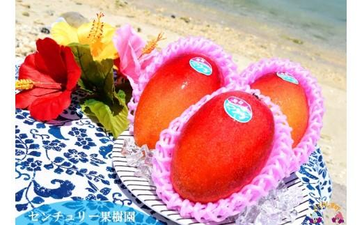 214センチュリー果樹園の勝さんが大切に育てた完熟マンゴー(1㎏)