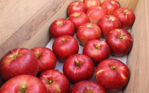 【発送月を選べる】イーハトーヴ訳ありリンゴお試しセット《予約受付》 【005】