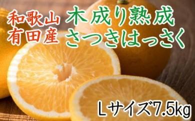 ■こだわりの和歌山有田産木成り熟成さつき八朔7.5kg(Lサイズ)[2021年4月~発送]
