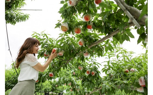 2-9-38 完熟フルーツこだわり探訪(果物狩り体験ツアー 1名様分)