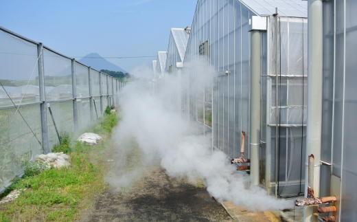 温泉の蒸気を利用してハウス内を暖めて育てる、エコな栽培方法を取り入れた「温泉完熟マンゴー」