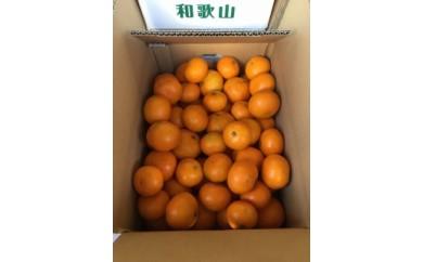 ■和歌山産 有田みかん 7.5kg 【家庭用】[2020年11月~発送]