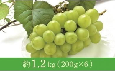 年明け 津軽産 徳用シャインマスカット約1.2kg(200g×6)