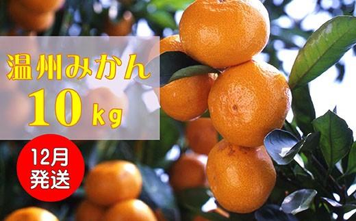 B0032.季節の味覚!貝塚市産温州みかん10kg