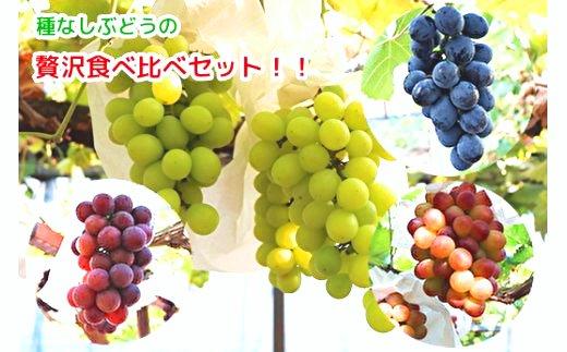 武冨さんちの種なしぶどう贅沢食べ比べセット(画像はイメージです)