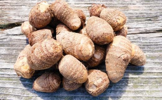 【10月配送予約】小郡産の里芋「白芽大吉」2.5kg ふくおかエコ農産物認証